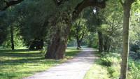 Treed park